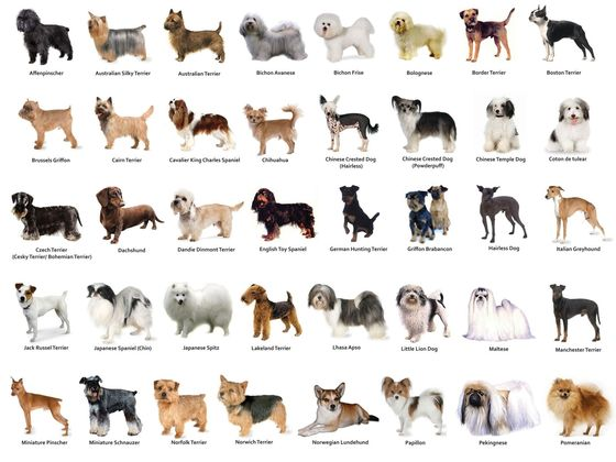 How To Find Out Your Dog S Breed