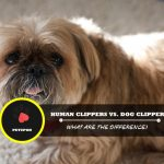 Human-Clippers-vs.-Dog-Clippers