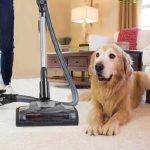 Best Canister Vacuum for Carpet and Pet Hair